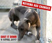 Greyhound Racing - Shut It Down